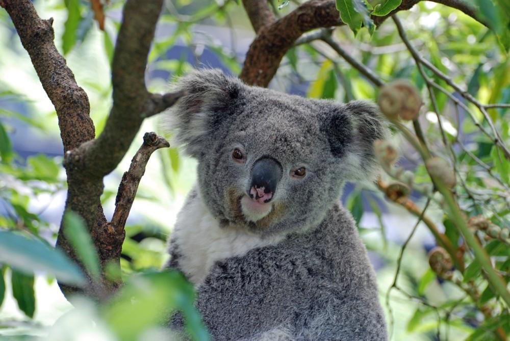 HighLowMarkets Pty Ltd(ハイロー)はオーストラリア居住者のみのサービスになる